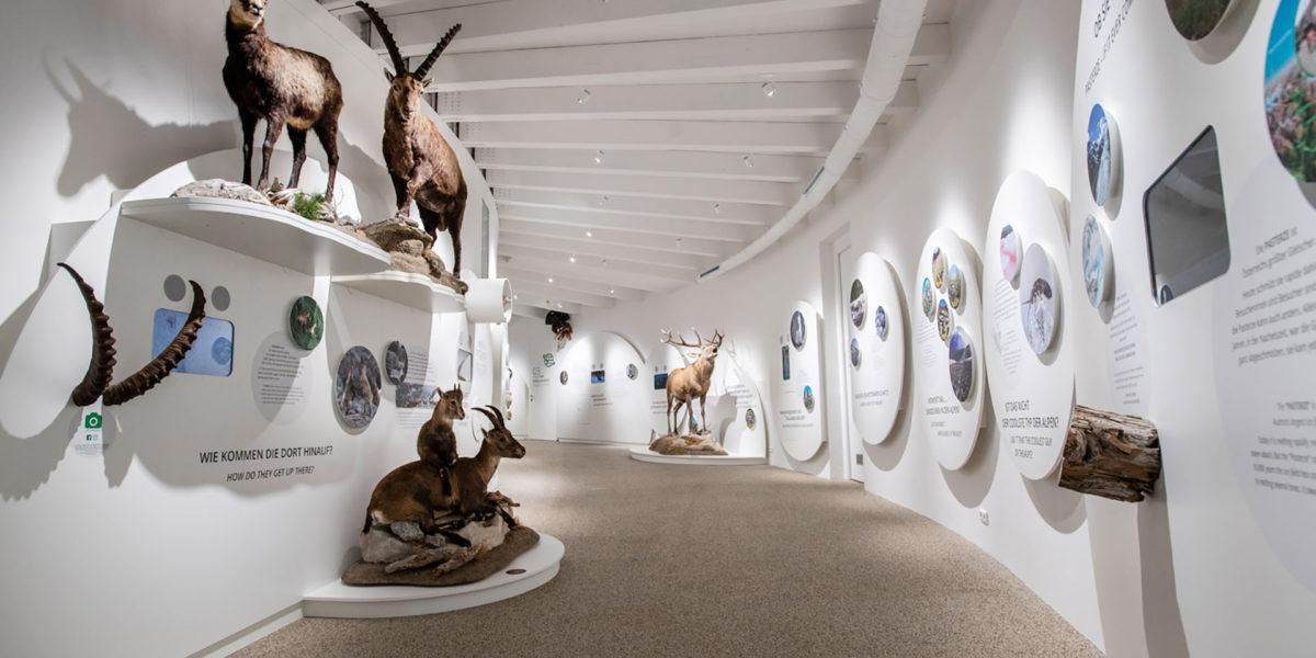 Besucherzentrum Mallnitz - Karlheinz Fessl - karlheinzfessl.com